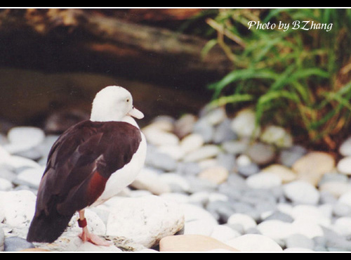 bird_HK park