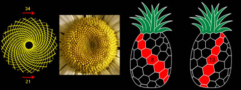 Fibonacci_tree